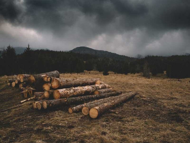 Where Timber Comes From